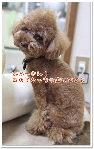 3_20110804175317.jpg