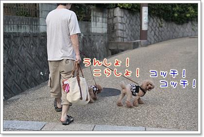 3_20110814171521.jpg