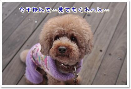 3_20111112215504.jpg