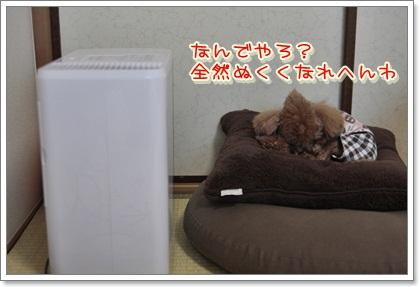 3_20111124095716.jpg