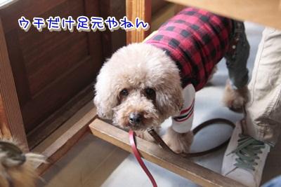 3_20120317132309.jpg