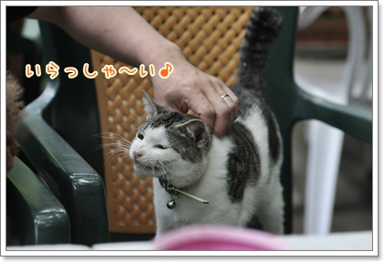 4_20110610104219.jpg