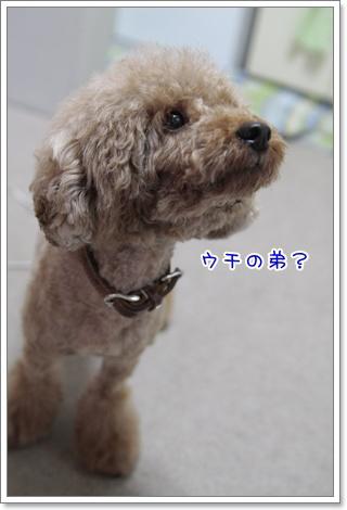 4_20110720135813.jpg