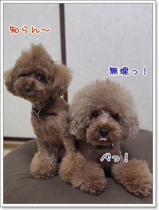 4_20110804175317.jpg