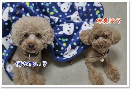 4_20111030123908.jpg