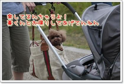 4_20111103120944.jpg