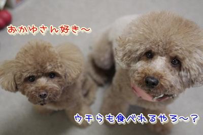 4_20120114124816.jpg
