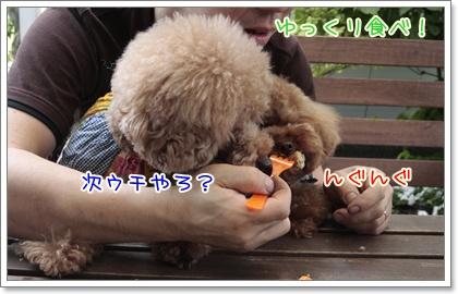 5_20110617130809.jpg