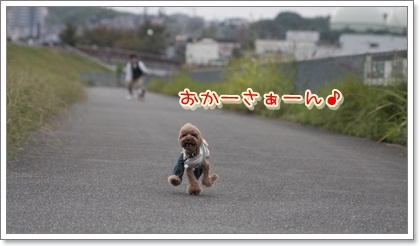 5_20111103120944.jpg