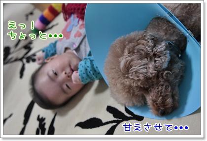 5_20111108231126.jpg
