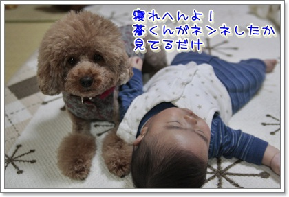 5_20111121150913.jpg