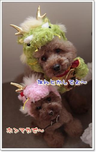 5_20111205222027.jpg