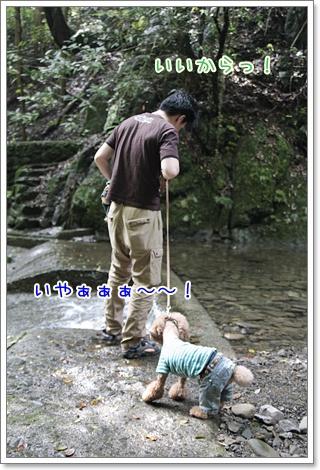 6_20110610104218.jpg