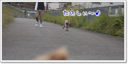 6_20111103120944.jpg