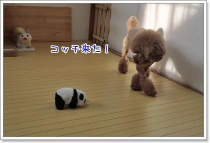 8_20110613184852.jpg