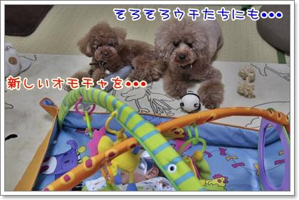 8_20110821121545.jpg