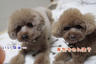 8_20120115104537.jpg