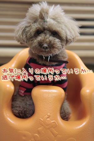 a_20120303154357.jpg