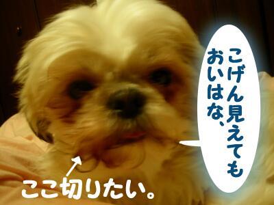 20080124011048.jpg