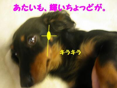 20080124011741.jpg