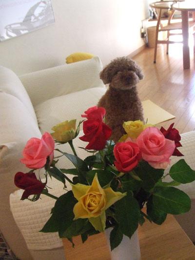 薔薇とkuma