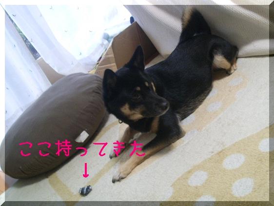 PIC_0039.jpg