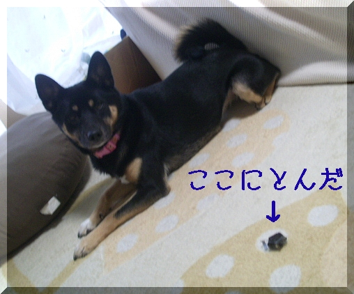 PIC_0040_20111123215515.jpg