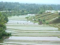 広大な田んぼで田植えする人たち