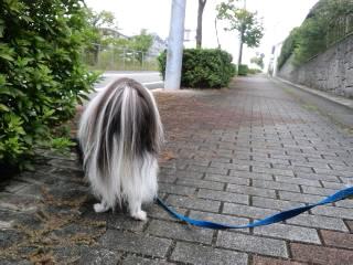 近所をお散歩♪