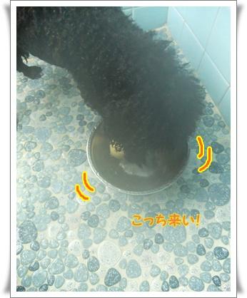 008_20111031085509.jpg