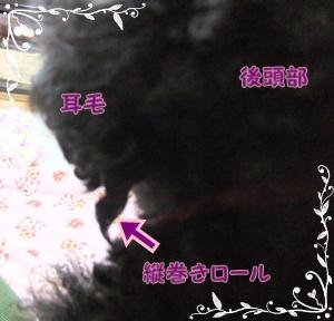 011_20120227144932.jpg