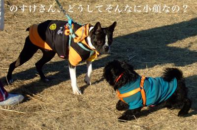20080127_01.jpg