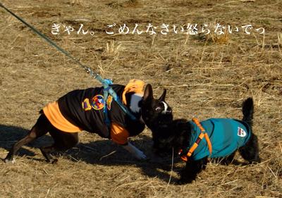 20080127_02.jpg