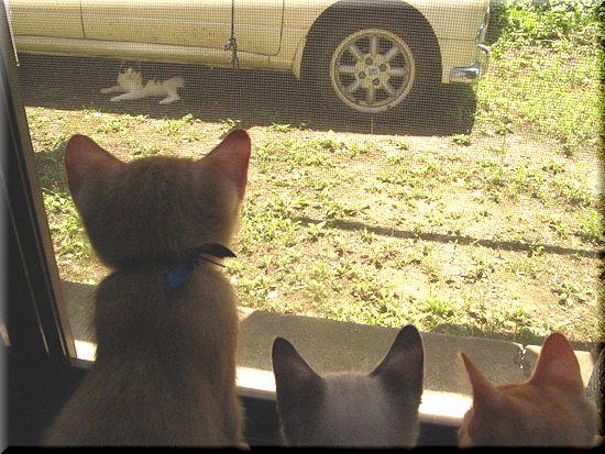 初めての猫客さん1