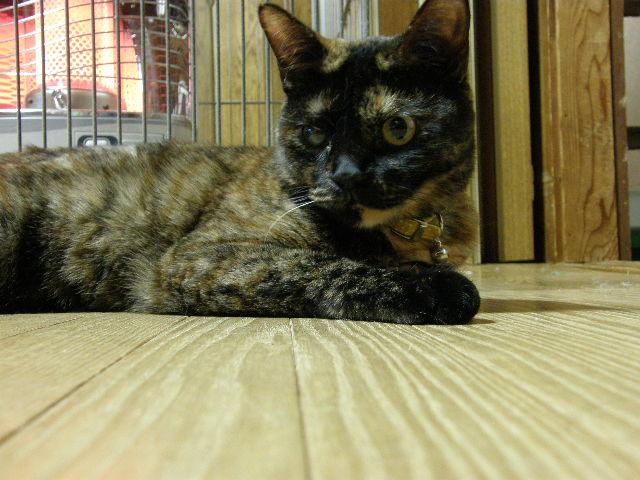 cat 013