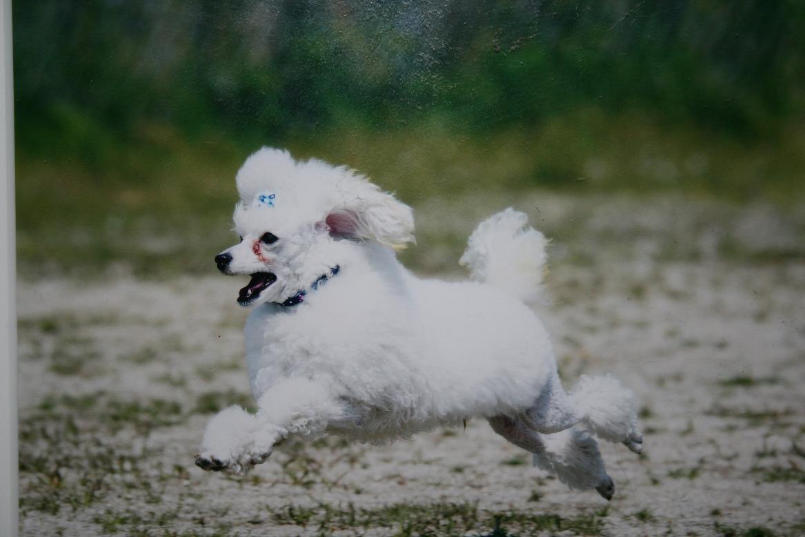 犬 家 01801