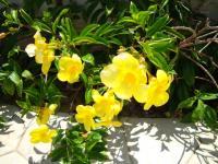 石垣の花2