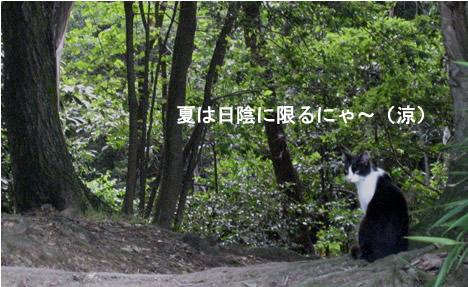 将軍塚の猫