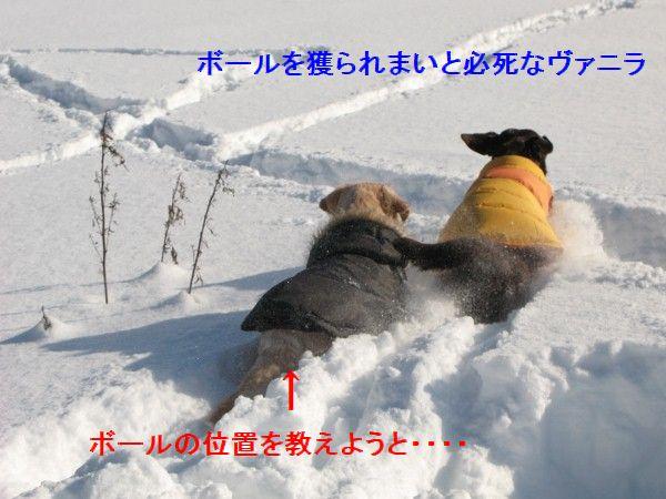 IMG_0069 (600x450)