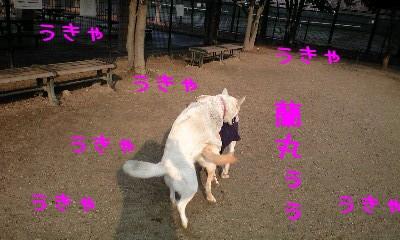リリィちゃん&蘭丸
