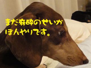 201111102.jpg