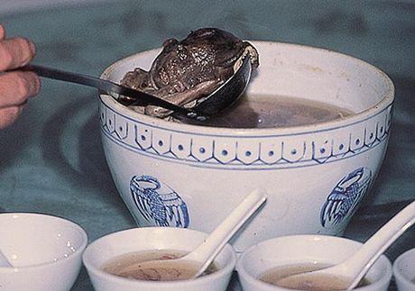 胎児スープ