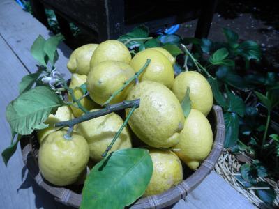 2011.6.7 limone