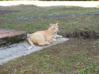 2011.7.28   フィレンツェの猫