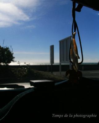 車窓から海のきらめき