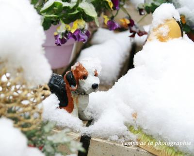 snowわんちゃん。