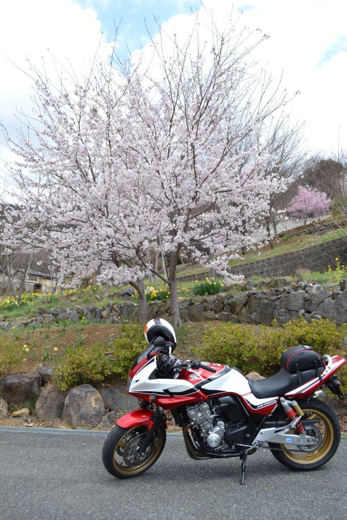 20110410_006.jpg