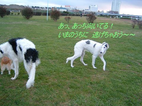20061213211226.jpg