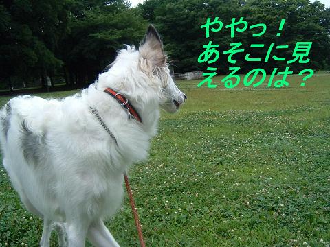 20070715135155.jpg