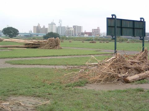 台風後の河原で 0030003